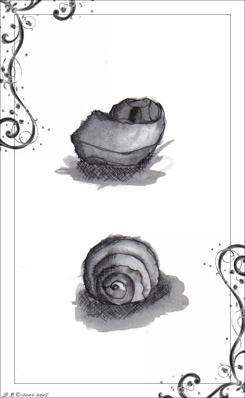 Shells by d00bie