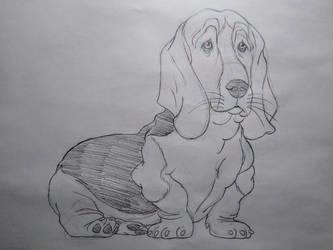 Basset Hound Sketch