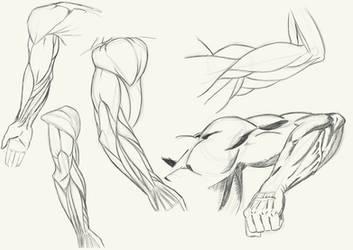 Arm Anatomy Sketches
