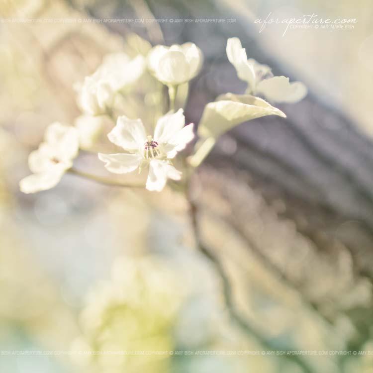 Aspiring Skyward 7915 by AforAperture