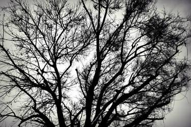 Branch by Sugipringgandani