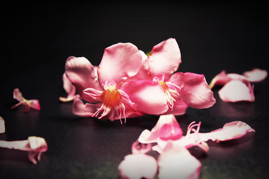 Flower 1 by Sugipringgandani
