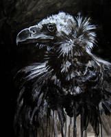 Morbid Curiosities: Vulture by jskaphobe