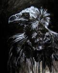 Morbid Curiosities: Vulture