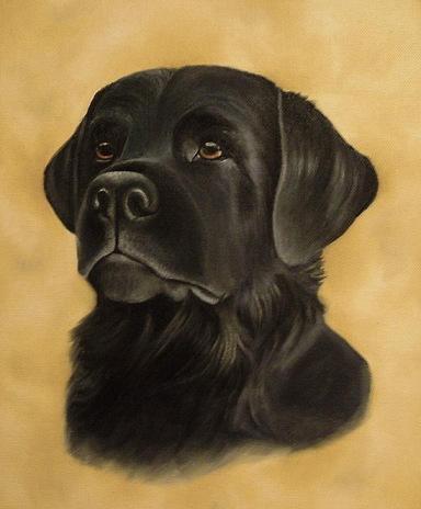 Connan Meu Pet Labrador_by_Kaelycea