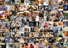 Ultimate Cat Collage by mineloves