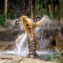 Tigers Rising