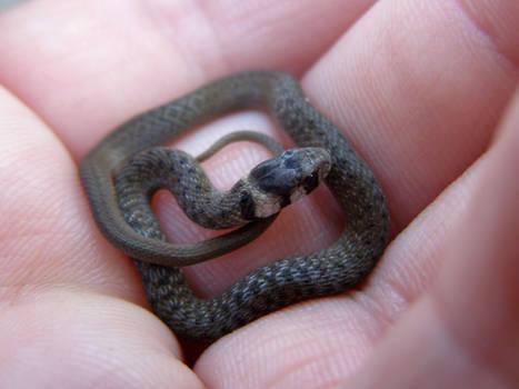 Square Snake