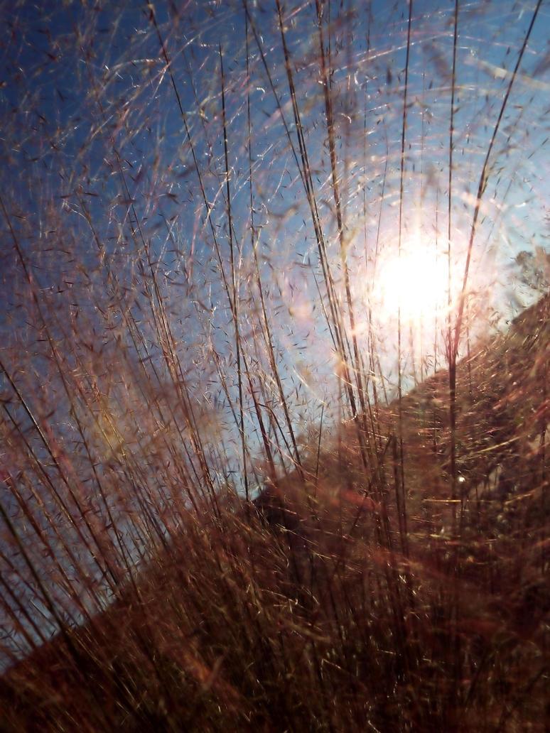 Grasses 04 by LissaMonster