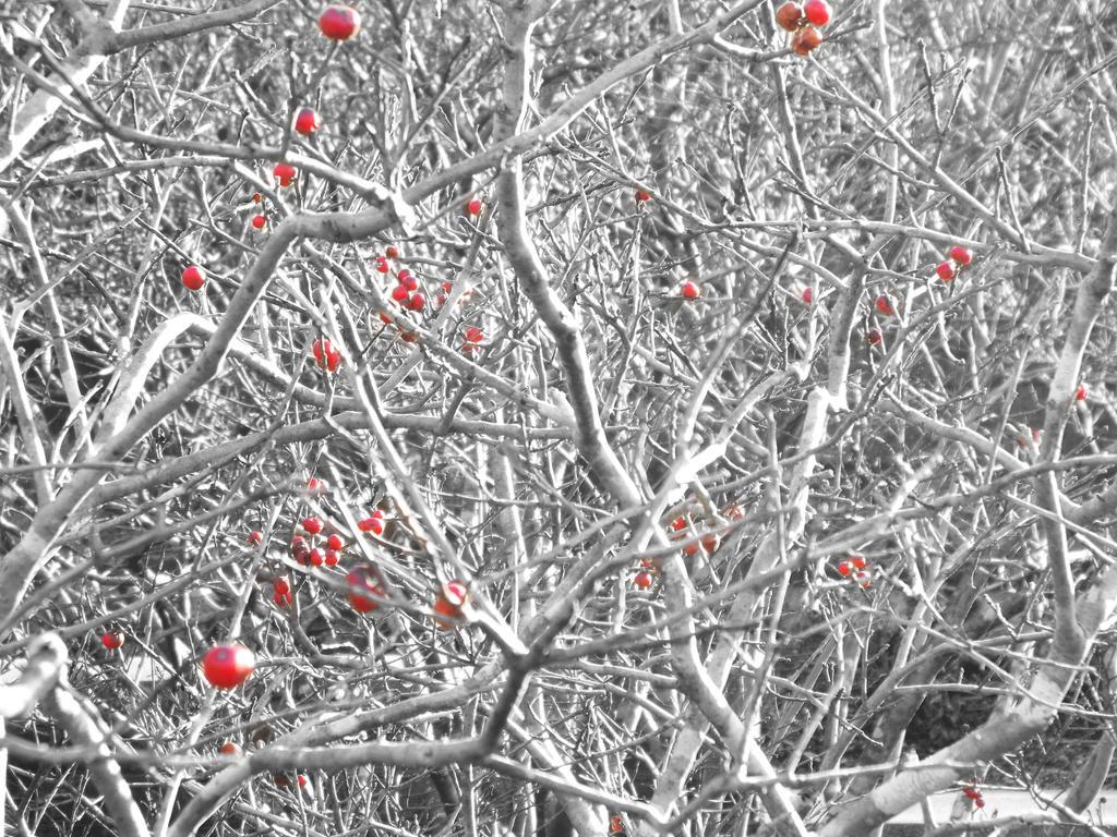 Winterberry 03 by LissaMonster