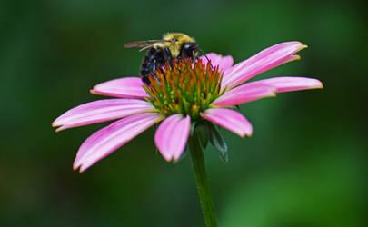 Bee 01
