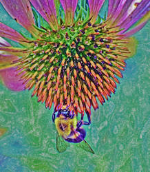 Psychedelic Bee