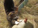 Coockie the cat 72