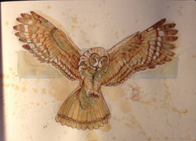 Daily Watercolor animal Sketch: Owl by RM-WINCH