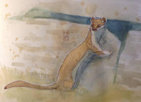 Daily Watercolor animal Sketch: Weasel by RM-WINCH