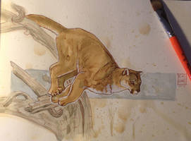 Daily Watercolor animal Sketch: Cougar by RM-WINCH