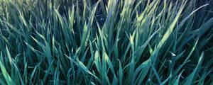 simply_grass_wo frames