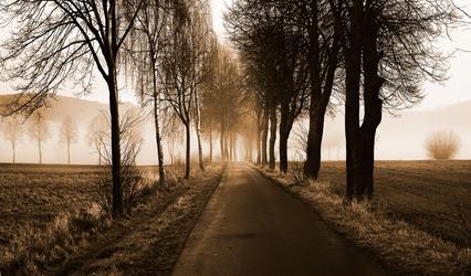 Fog on a road by Kunstlab