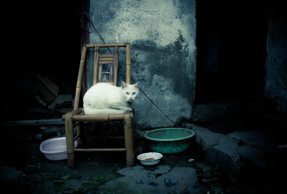 Long Wang Miao Zheng Jie cat by clalepa