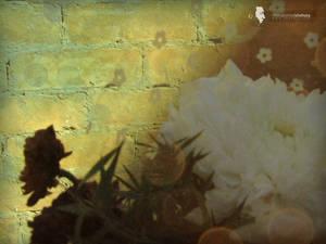 sad flower shadow