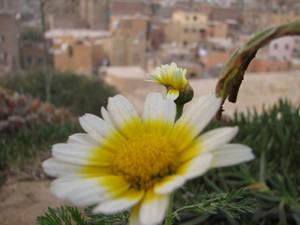 flower watchin
