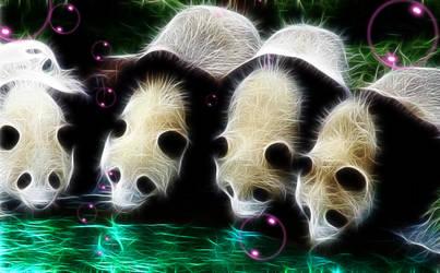 Curious Pandas by wazzy88