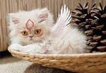 Kittyterasu