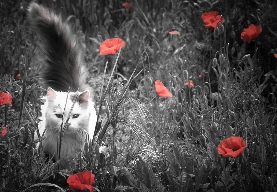 Maji svatki za gnjaviti...[Ne zamerite mi...] - Page 2 Wild_cat_by_wildfox76-d59etso