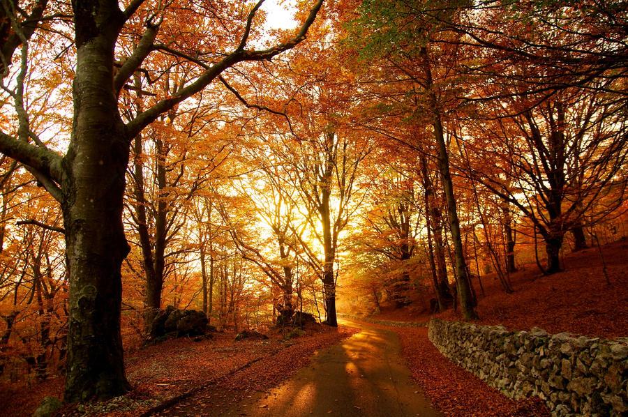 Autumn Lothlorien by wildfox76