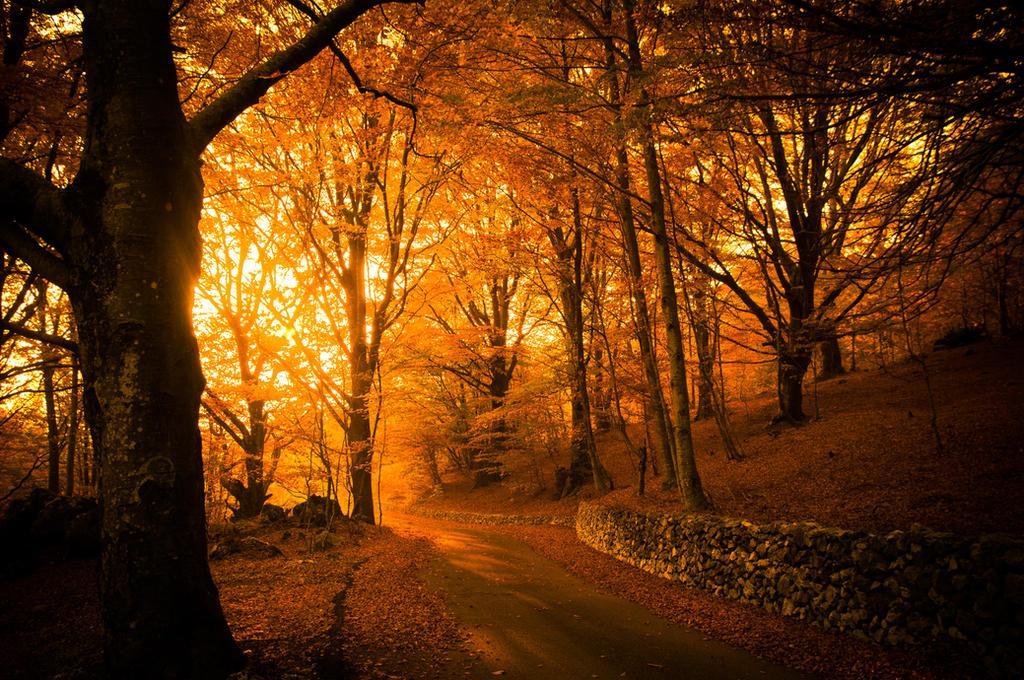 Golden Autumn Light in autumn forest by wildfox76