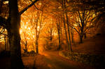 Golden Autumn Light in autumn forest