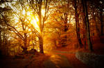 Warm autumn light through golden trees by wildfox76