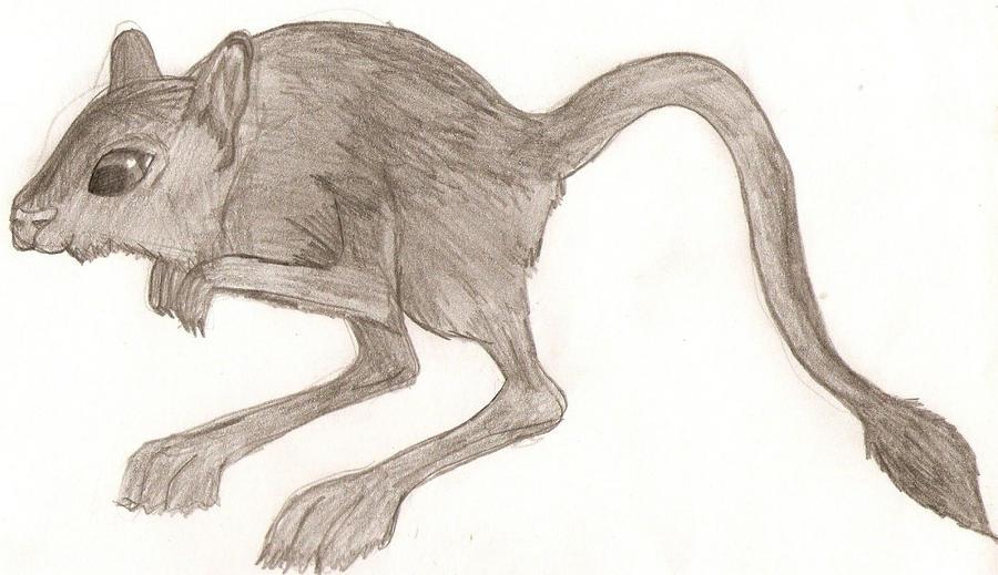Line Drawing Of Desert Animals : Desert mouse by kiwithunder on deviantart
