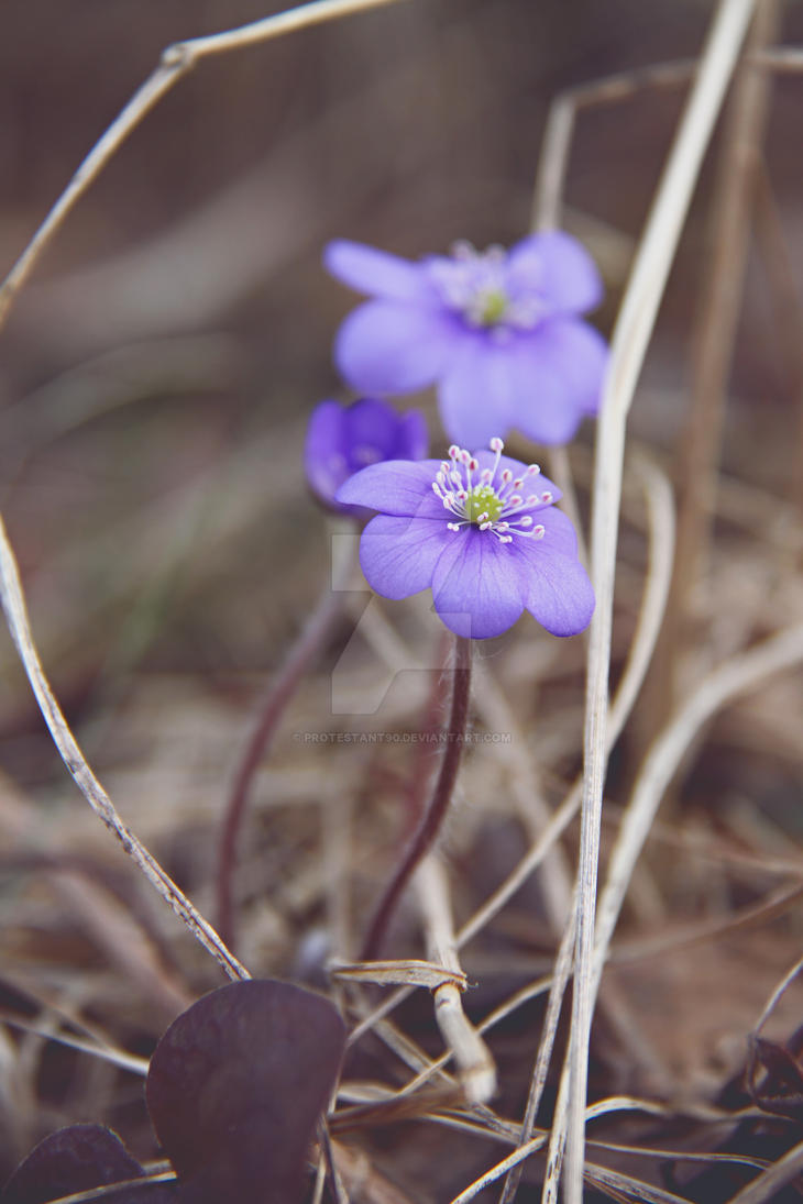 Signs of spring by protestant90