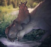Dinovember 2: Pachyrhinosaurus