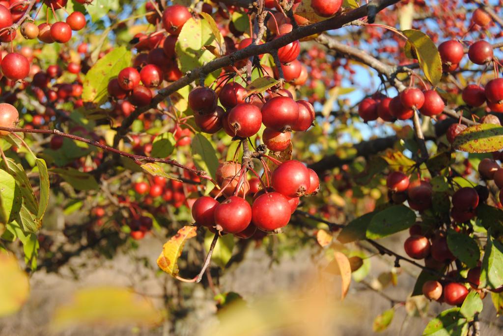 berrys by shy-boi-123