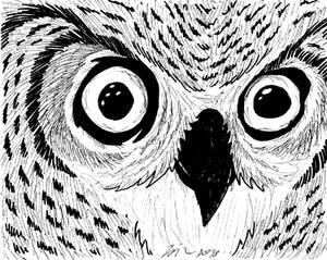 Owl 2018