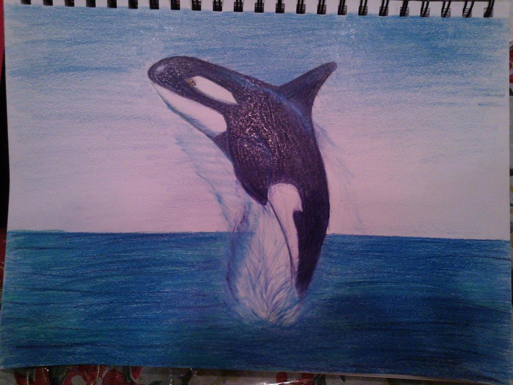 Killer Whale by WolfsRainKTTHB