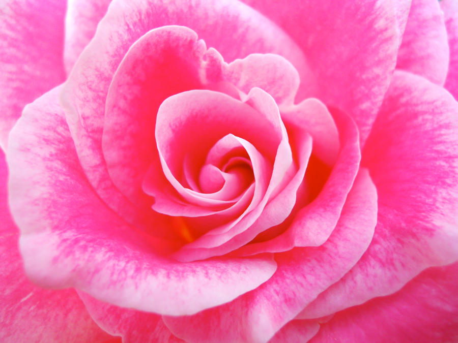 Full bloom by Onlyfox