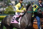 Race Horse 2