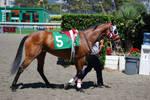 Race Horse 13