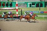 Race Horses 5