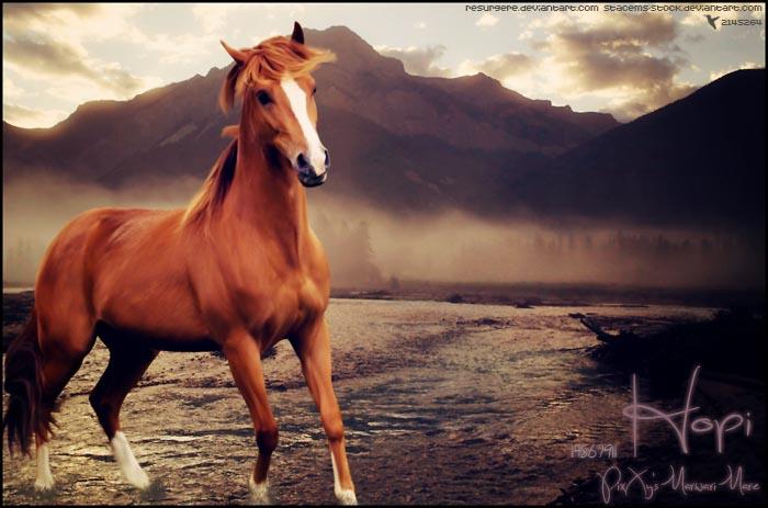 Hopi by xxtgxxstock