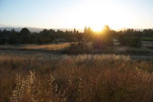 Field Sunset by xxtgxxstock