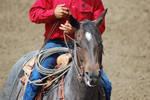Western Blue Roan Horse