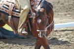 Western Bay Horse 5