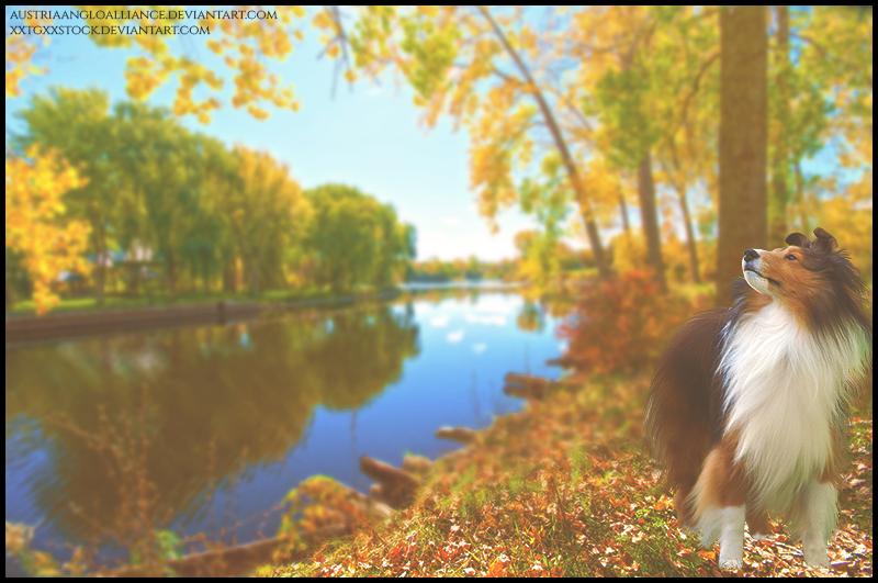 Colors Of Autumn by xxtgxxstock