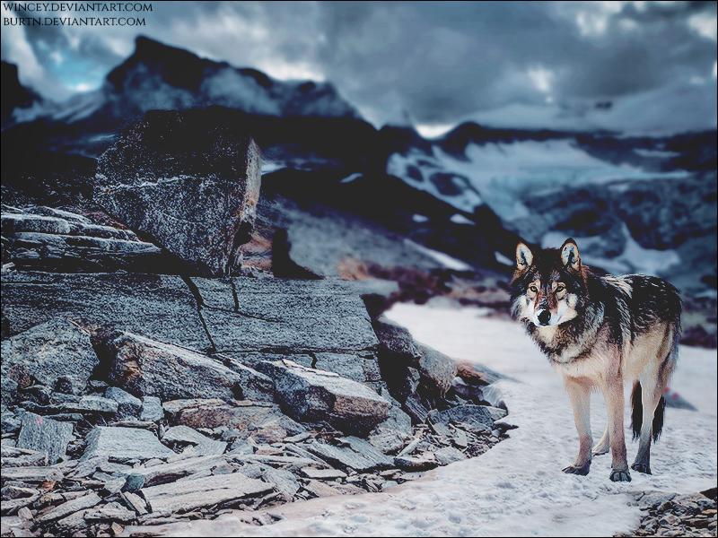 Dark Winter by xxtgxxstock