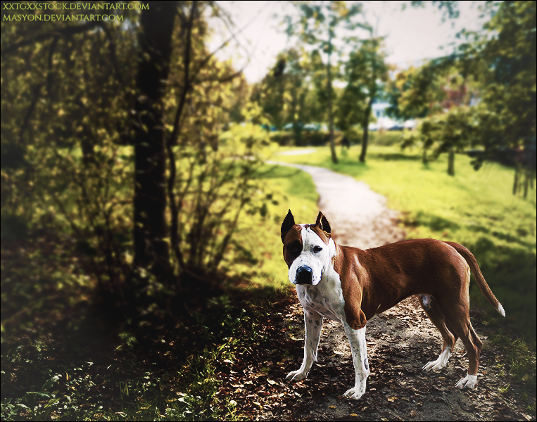 Staffie In Park by xxtgxxstock