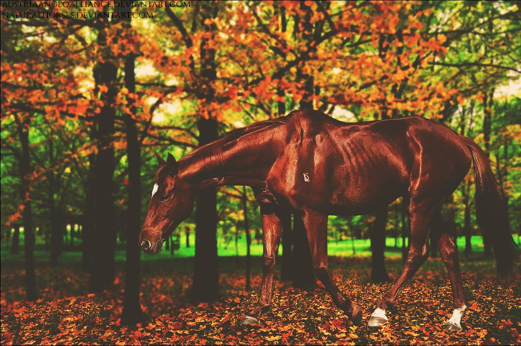A Walk Through The Woods by xxtgxxstock